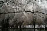 O'Sullivan Lake Gets Iced.