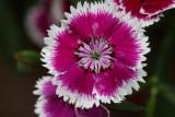 Flower CloseupAugust  6, 2008