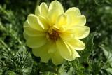 Yellow FlowerSeptember 10, 2008