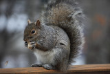 SquirrelFebruary 10, 2009