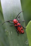 Beetle MacroJuly 2, 2009
