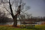 Old Tree in HDRDecember 2, 2009