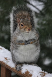 Squirrel in the SnowDecember 31, 2009