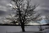 Tree SilhouetteJanuary 12, 2010