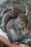 Squirrel EatingFebruary 14, 2010