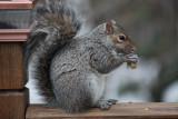Squirrel with PeanutFebruary 19, 2010