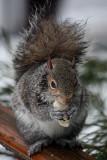 SquirrelFebruary 25, 2010