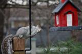 Squirrel at Bird FeederApril 6, 2010