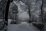 Snow StormMarch 28, 2008