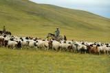 Herding sheep and goats near Lake Erkhel