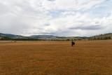 Wide open fields, perfect for horseback riding, near Khatgal