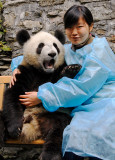 Our guide Michelle with a panda cub, Wolong