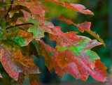 Autumn 2007 in Northern Virginia