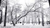 l'albero che protegge le fosse comuni 05