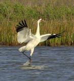 South Texas Birding 2010