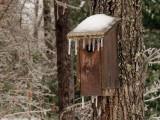 Birdhouse-7641