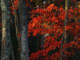 0125.Leaves