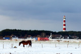 Lone horse in the snow