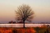 golden february light