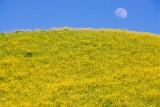 Moon and Mustard