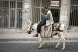 Donkey power