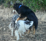 Bad Dog  - Illegal Move!