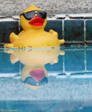 Yellow Rubber Ducky Impostor