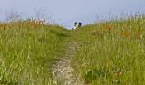 Jamie head top trail