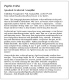 Spicebush Swallowtail Essay