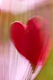 Happy Hearts*