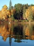Fall Reflections3