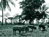 Dominican-Republic-04-IMG_0013.jpg