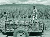 Dominican-Republic-04-IMG_0042.jpg