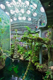 Inside the Rainforests Dome