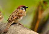 d90_sparrow_feb_09