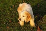 Buddy age 18 (Dec 18 1990 - March 24 2009)