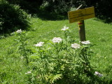 Signpost in the sun