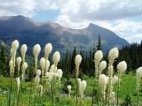 Montana, USA (Jul 2009)