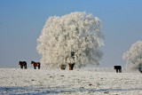 Horse snow...