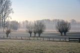 Cold & misty Morning