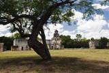 Tree at Mission Espada
