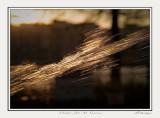 Water Jet At sunrise