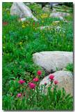 Vail Wildflowers