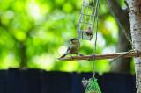 - 4th August 2008 - bird
