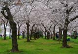 3/30/08 - Cherry Blossom Festival - Washington, DC