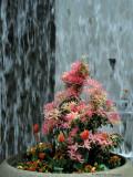 Flora & Fountain