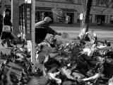 Pigeon Whisperer ll