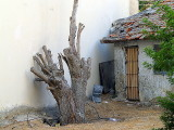 bar kochba tree3.JPG
