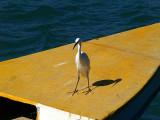 egret boat namal.jpg