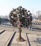 Bridge lock tree1.JPG